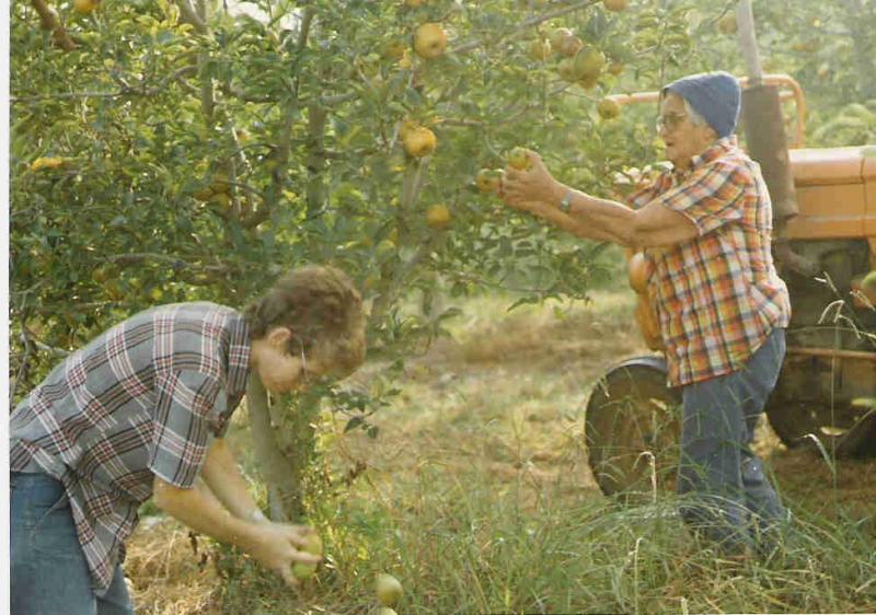 קטיף אחרון במטע התפוחים 1986